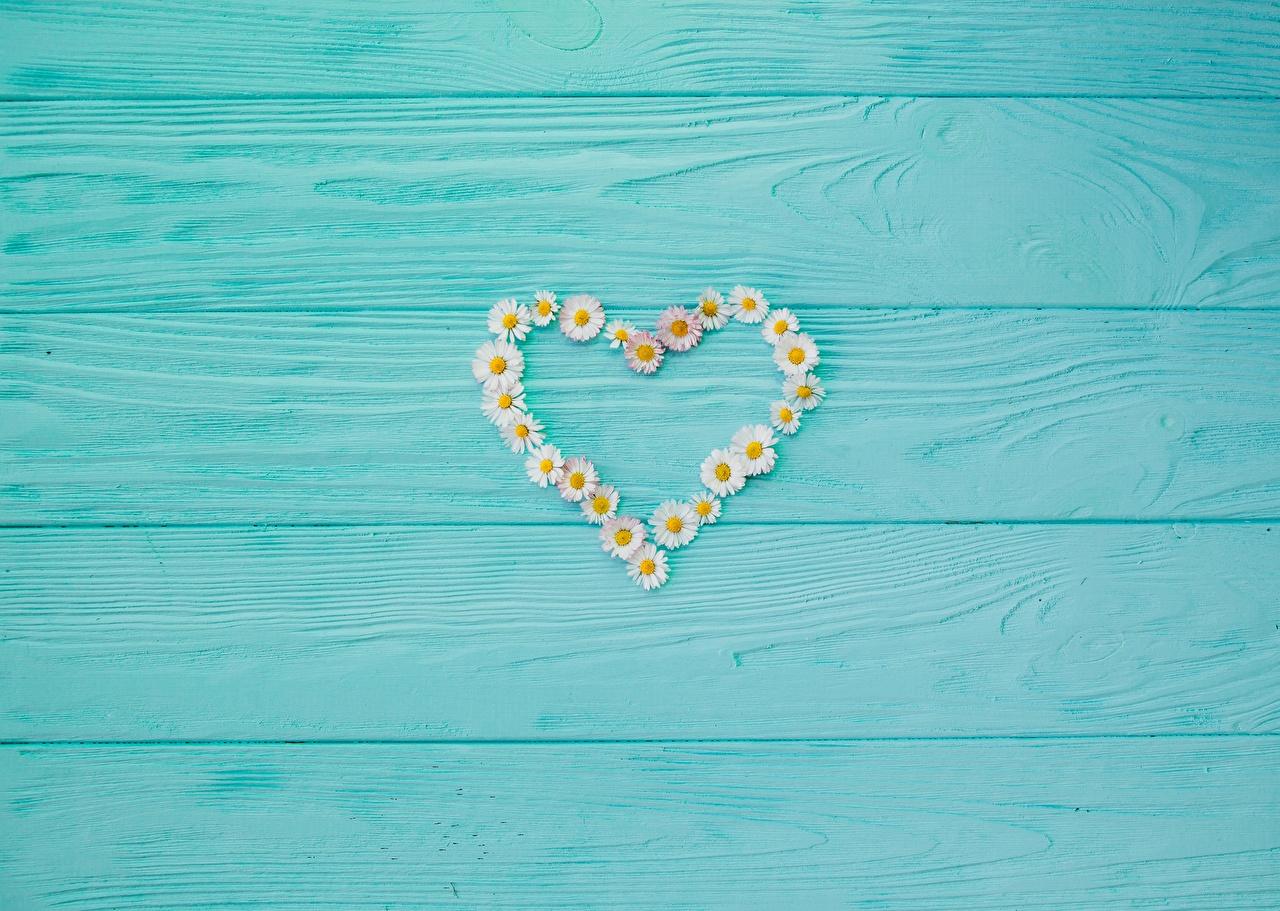 Bilder von Valentinstag Herz Kamillen Vorlage Grußkarte Bretter