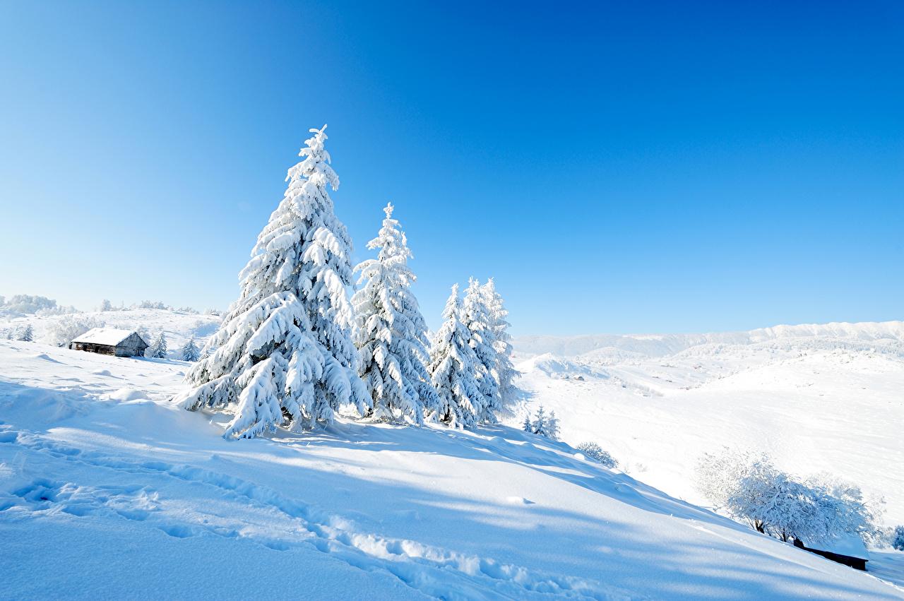壁紙 冬 風景写真 雪 トウヒ属 自然 ダウンロード 写真
