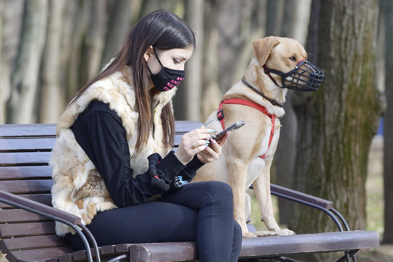 Bilder von Coronavirus Braune Haare smartphones Zwei Mädchens Hand Masken sitzen Bank (Möbel) Braunhaarige Smartphone 2 junge frau junge Frauen Maske sitzt Sitzend