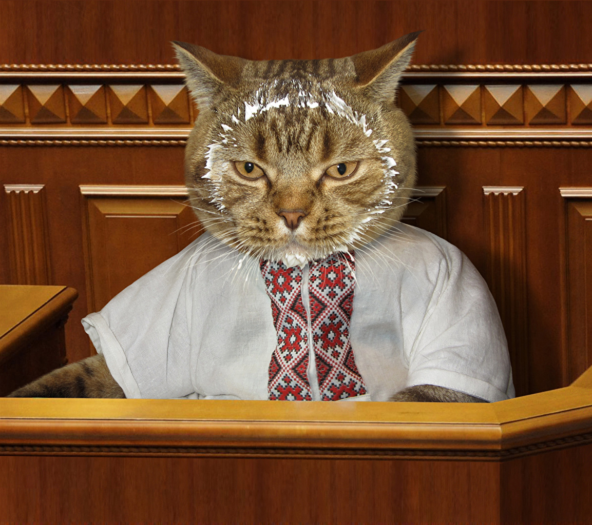 壁紙 クリエイティブ 飼い猫 シャツ おもしろい 動物