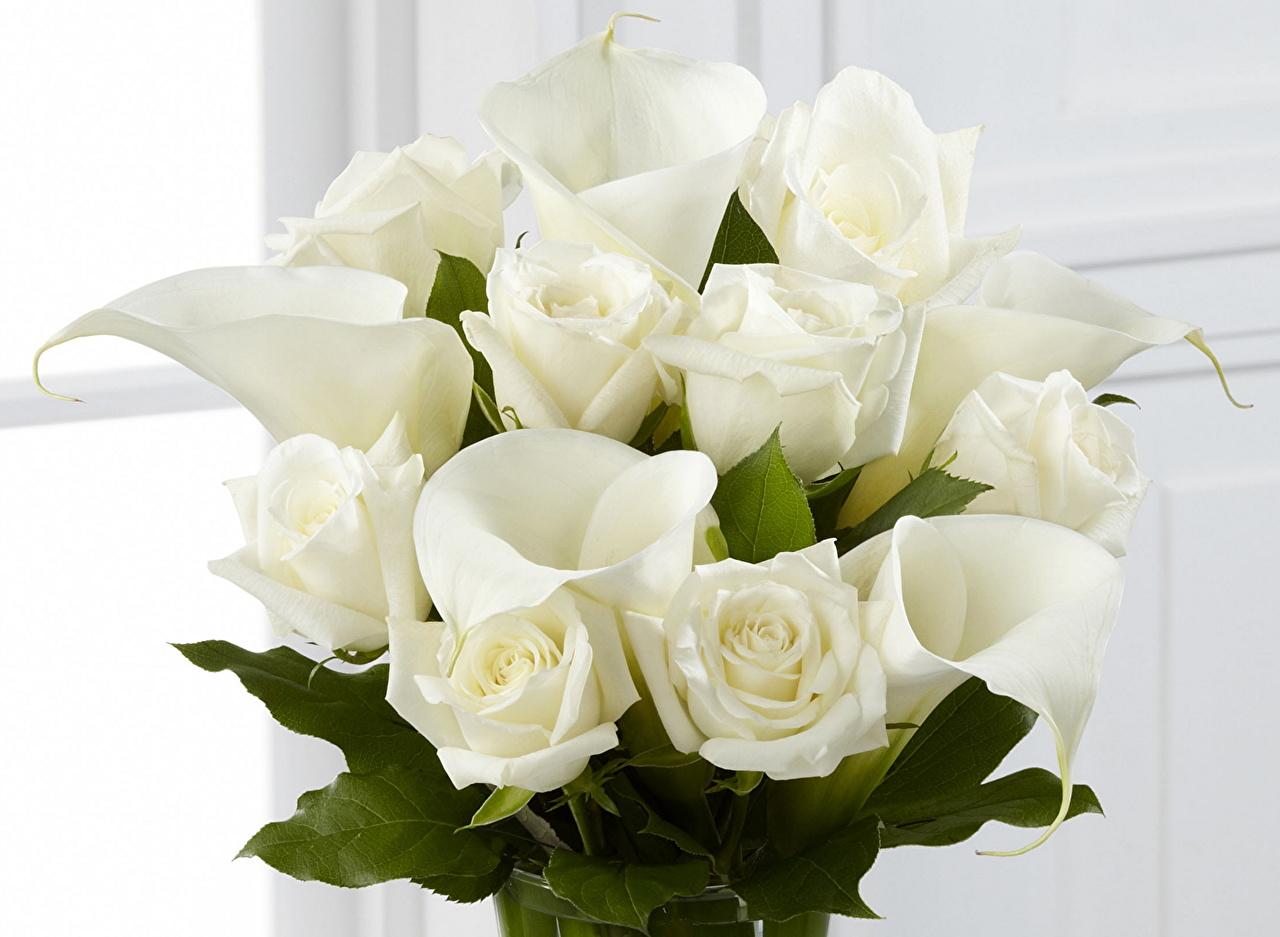 Desktop Wallpapers Bouquets rose White Callas Flowers bouquet Roses bog arum calla lilies marsh wild calla flower