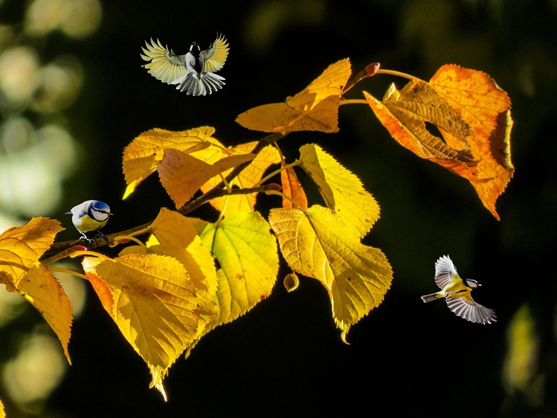 POEMAS SIDERALES ( Sol, Luna, Estrellas, Tierra, Naturaleza, Galaxias...) - Página 23 Birds_Tits_Autumn_Branches_Foliage_572675_1365x1024