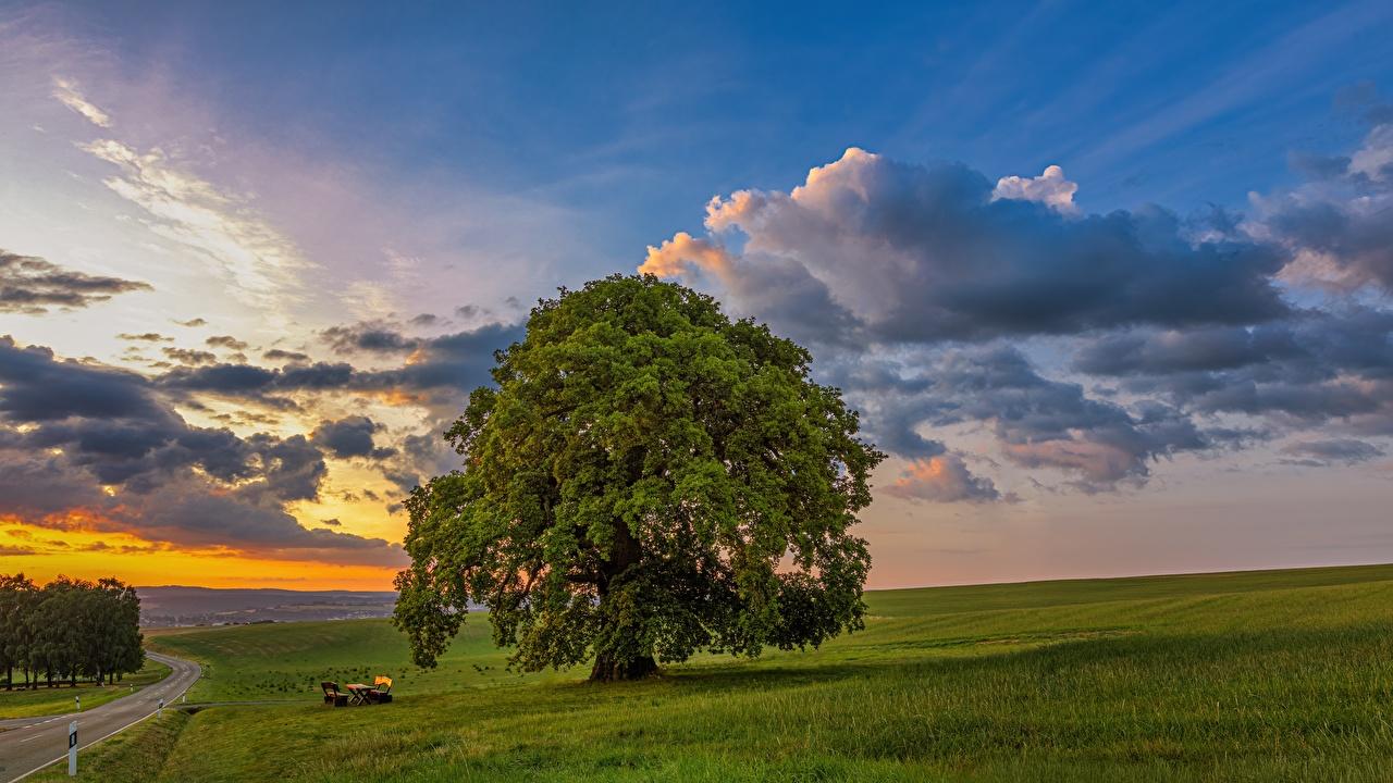 Bilder von Natur Himmel Grünland Sonnenaufgänge und Sonnenuntergänge Bäume Morgendämmerung und Sonnenuntergang