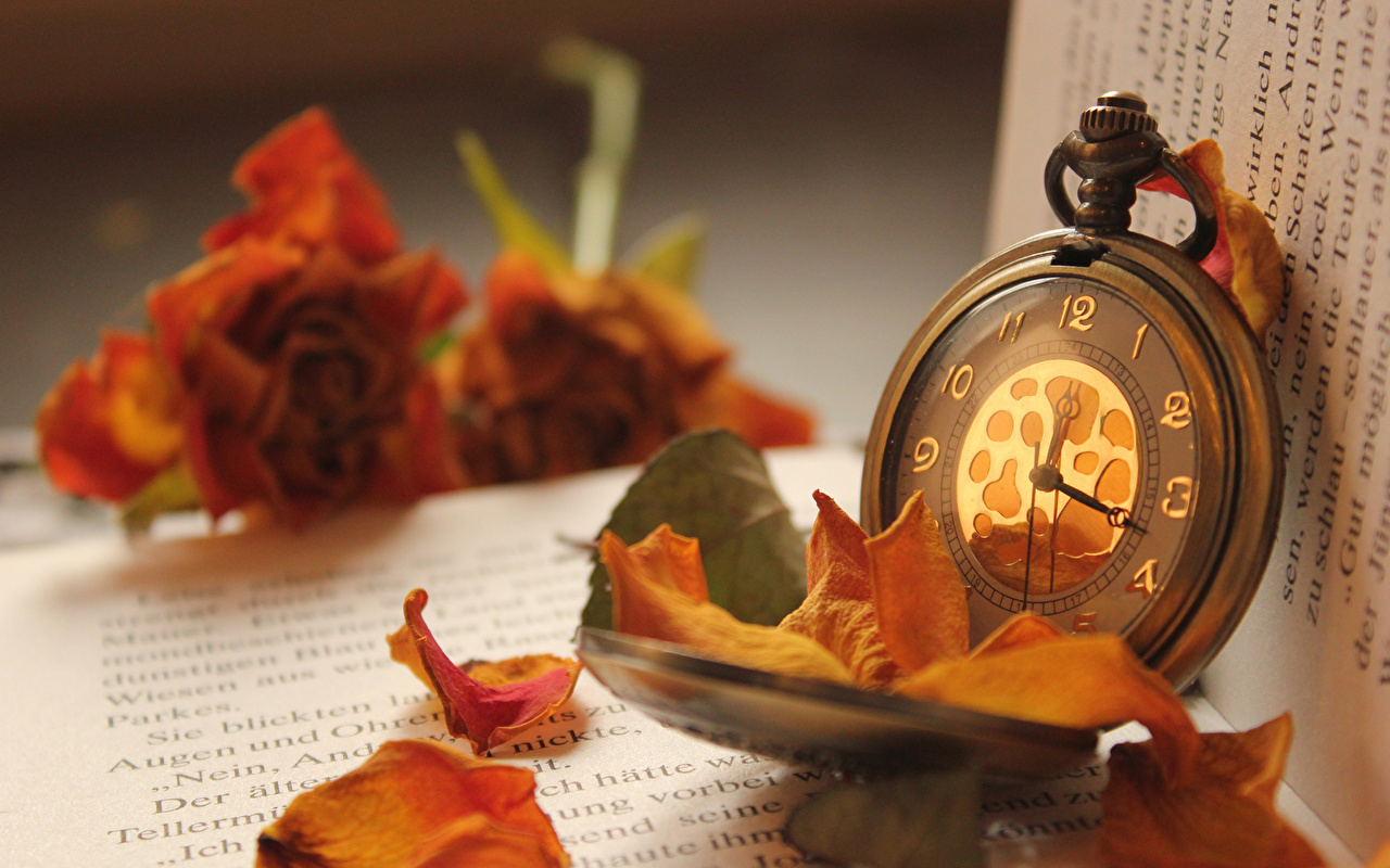 Photos Foliage Pocket watch Clock Book Leaf books