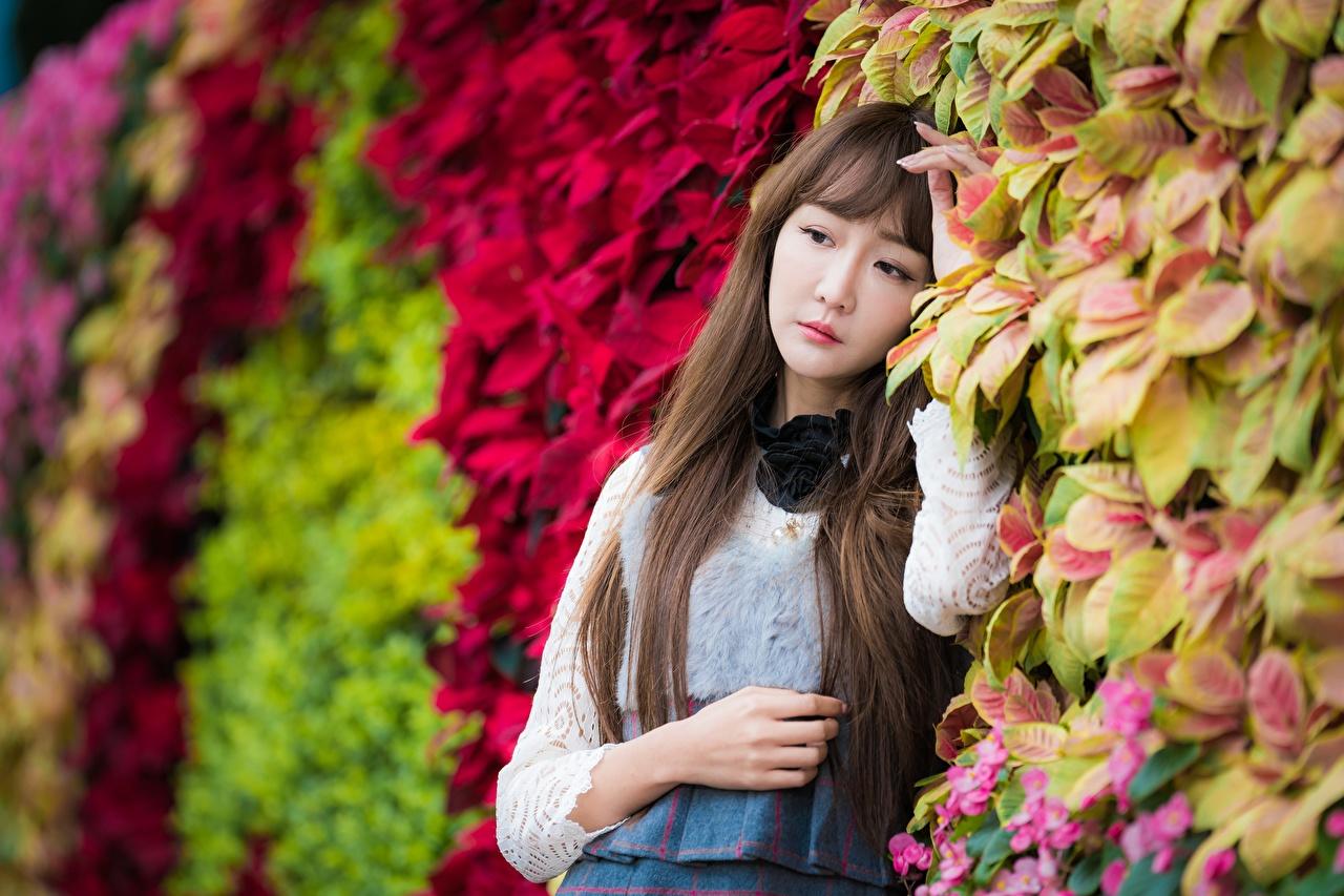 Bilder Blattwerk Braunhaarige unscharfer Hintergrund junge Frauen Asiatische Hand Blatt Braune Haare Bokeh Mädchens junge frau Asiaten asiatisches