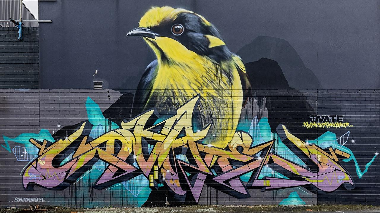 ,鸟,塗鴉,墙,,