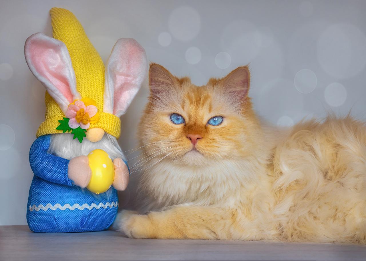 Fotos von Ostern Hauskatze Kaninchen Ei Starren ein Tier Katze Katzen eier Blick Tiere