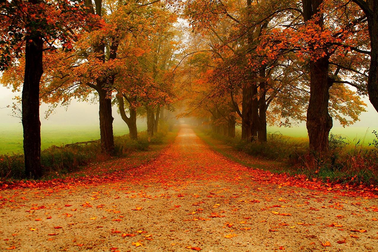 Outono Parque árvores Folhagem Alameda parques, Folha Naturaleza