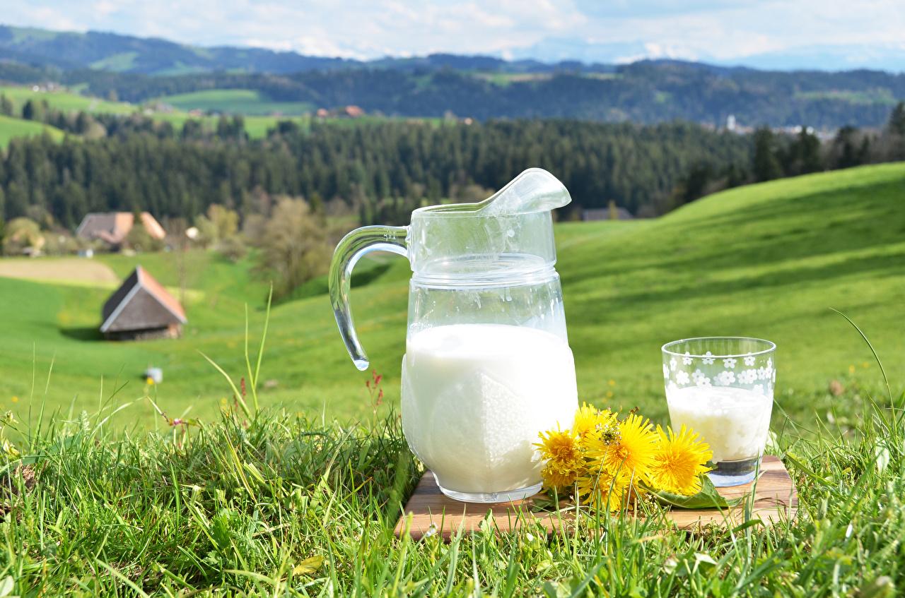 Image Milk jugs Meadow Taraxacum Highball glass Food Grass pitcher Dandelions Grasslands Jug container