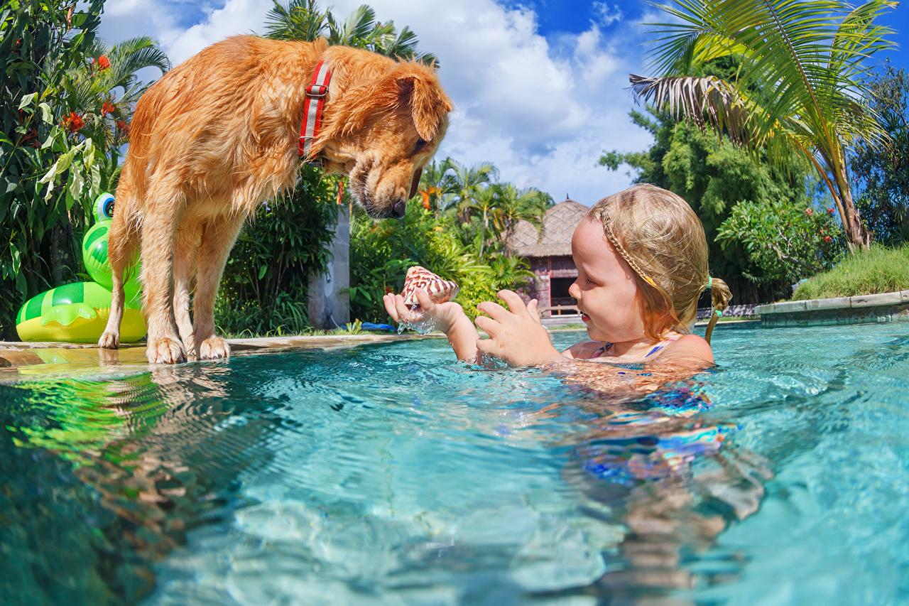 Photos Little girls dog Pools Children Shells Water animal Dogs Swimming bath child Animals