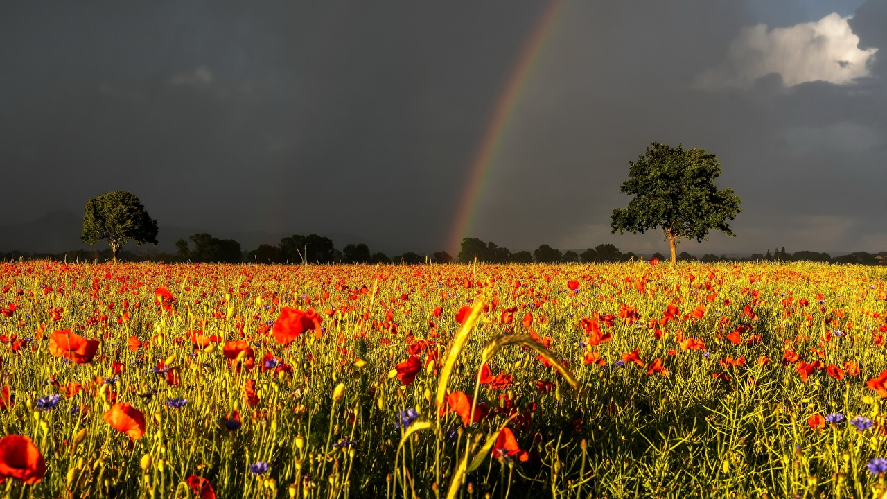 Photo Thundercloud Nature Rainbow Meadow Poppies storm cloud papaver Grasslands
