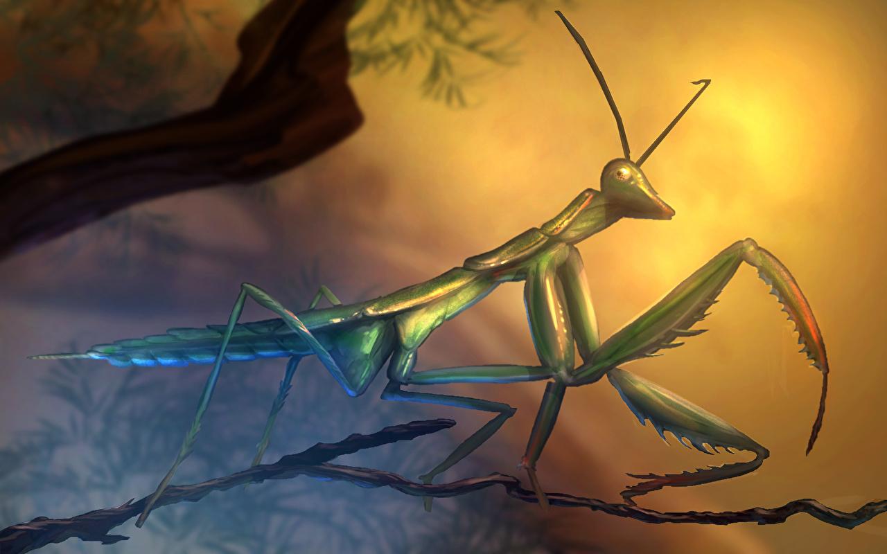 Wallpaper Insects mantodea Animals Painting Art Mantis animal