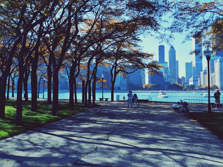Desktop Wallpapers Chicago city USA park Street Trees Cities Parks