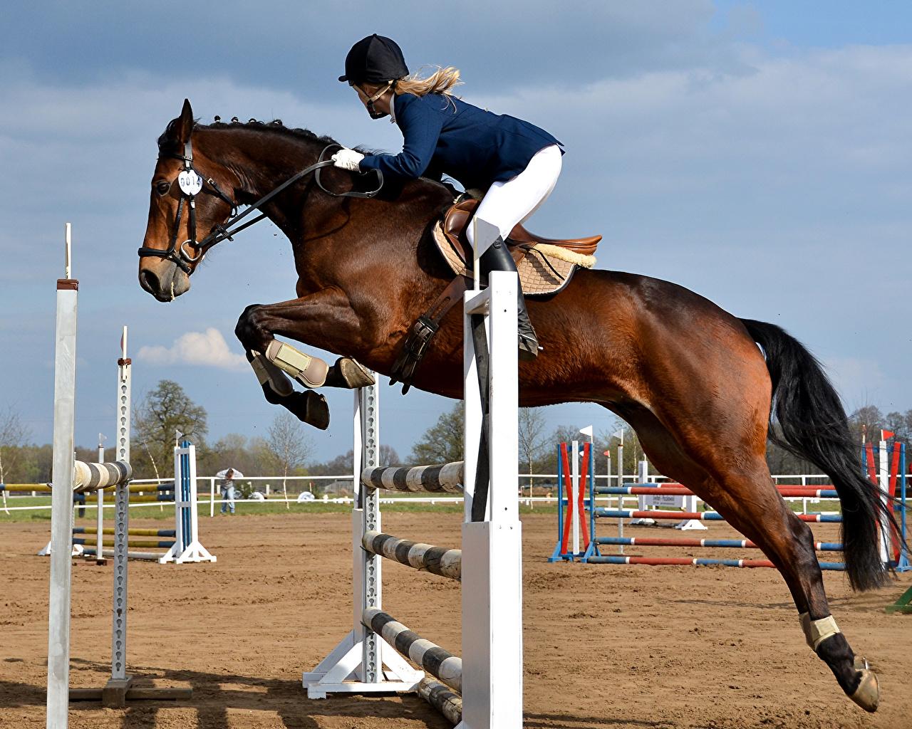 Wallpaper Horses Girls Jump Animals