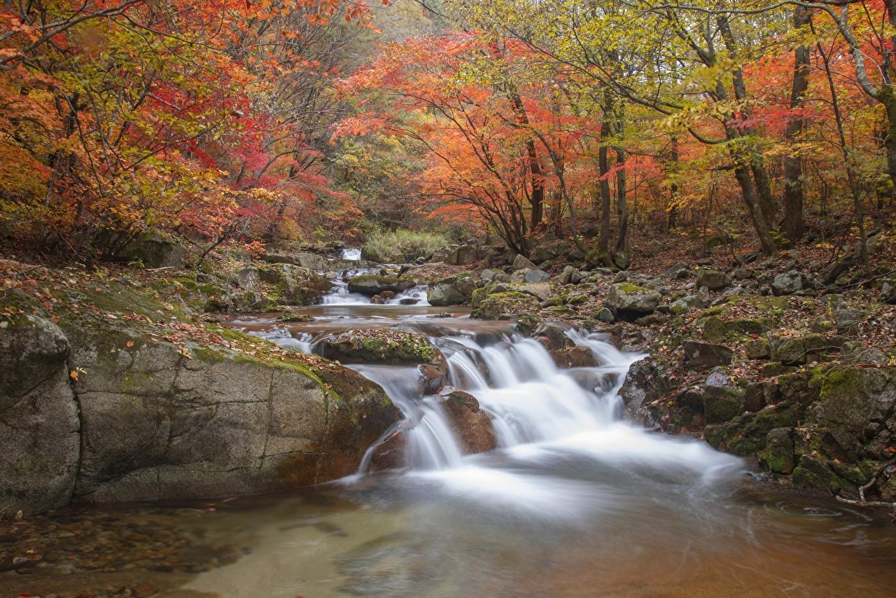 Fotos Blattwerk Bach Natur Herbst Steine Laubmoose Blatt Bäche Stein