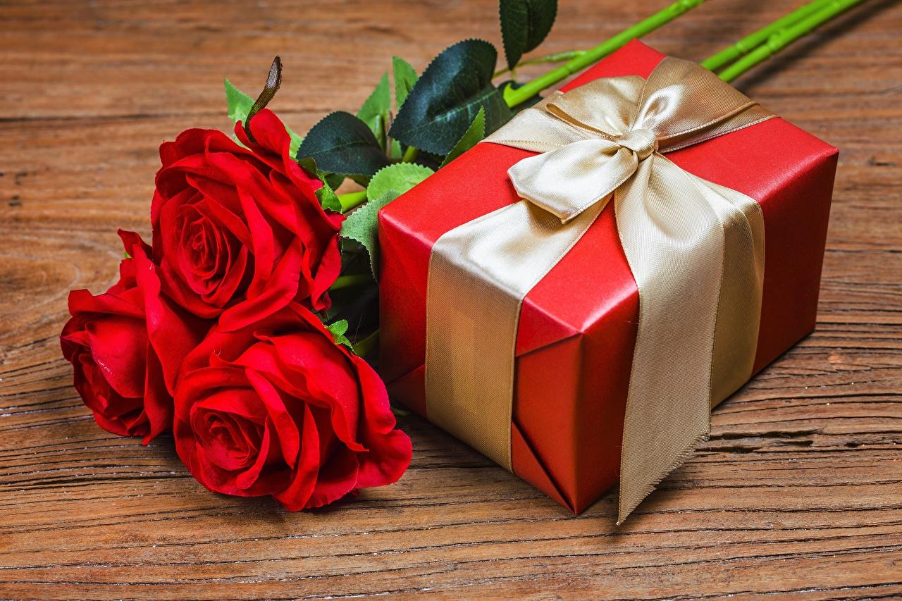 Fotos Rosen Blumen Schachtel Schleife Rose Blüte