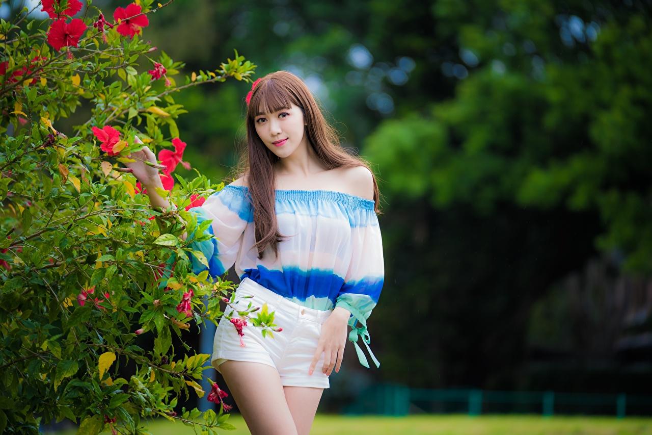 Bilder von Braune Haare Bokeh Pose Mädchens Asiaten Shorts Blick Strauch Braunhaarige unscharfer Hintergrund posiert junge frau junge Frauen Asiatische asiatisches Starren