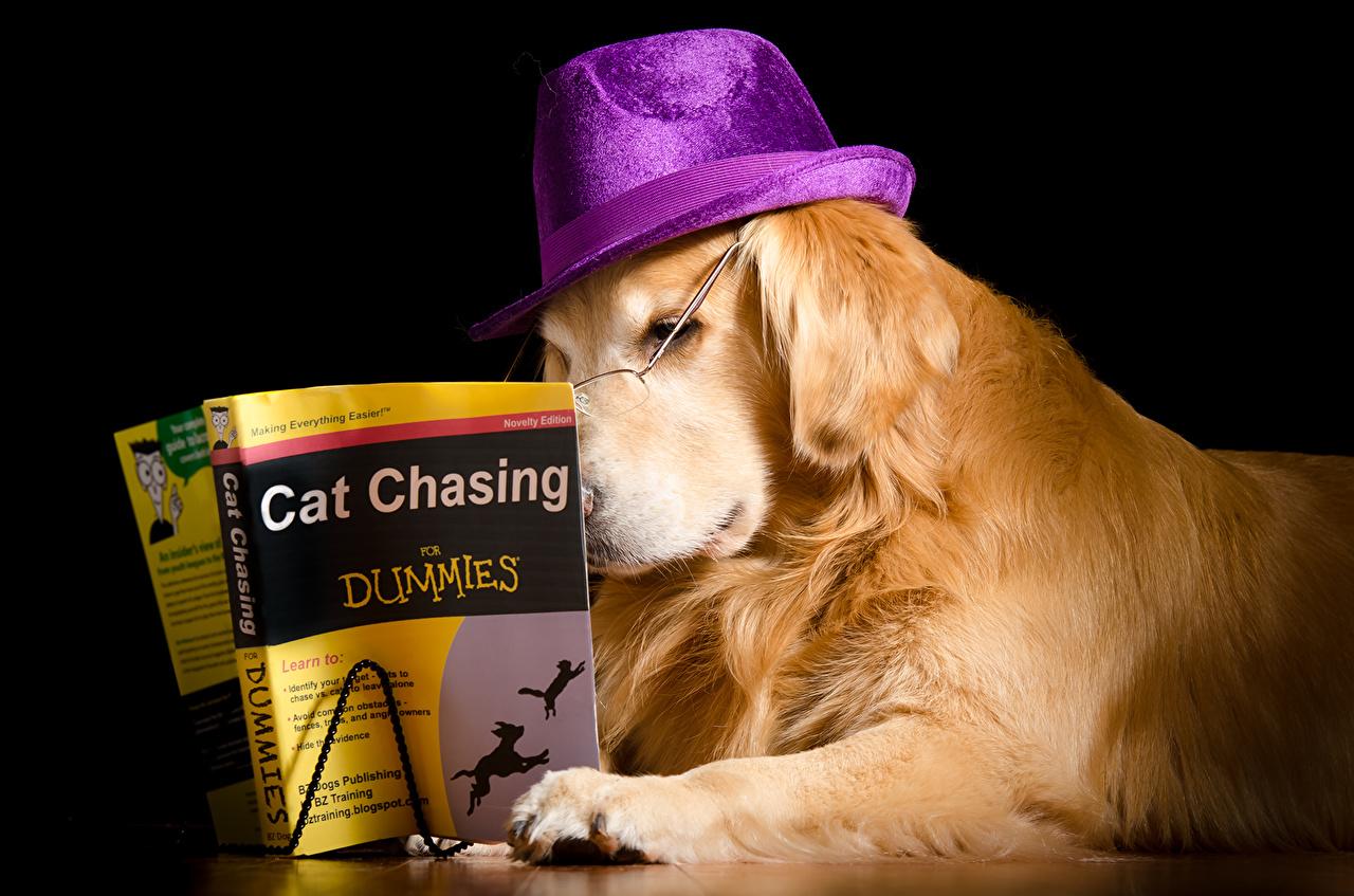 Cão Retriever Livro Chapéu Fundo preto Está lendo animalia, um animal, engraçados, cães, cachorro, livros Animalia Humor