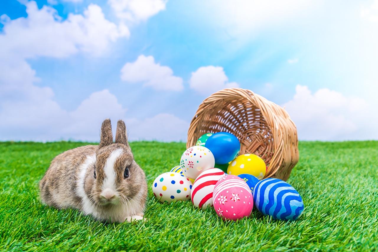 Фото Пасха кролик яйцами Корзина Трава Животные Кролики яиц яйцо Яйца корзины Корзинка траве животное