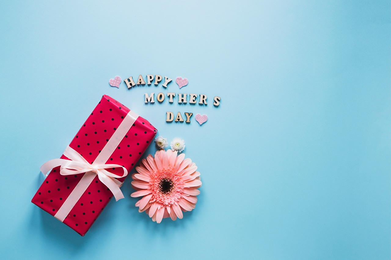 Pictures Mother's Day Gerberas Gifts Flowers Colored background gerbera flower present