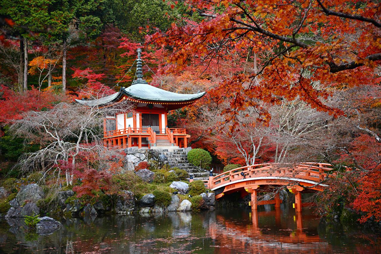 、日本、京都市、ガーデン、池、秋、パゴダ、橋、、庭園、自然