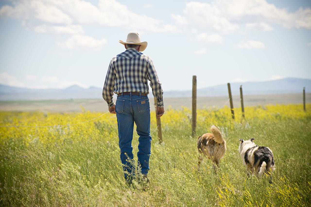 Bilder Hunde Cowboy Mann Der Hut Jeans Gras Tiere