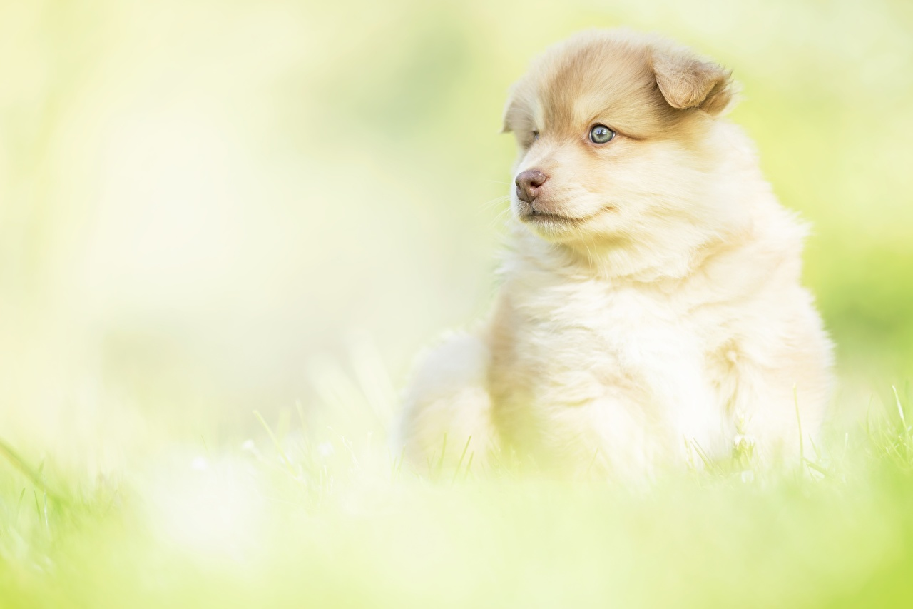 Image Puppy dog blurred background Glance animal puppies Dogs Bokeh Staring Animals