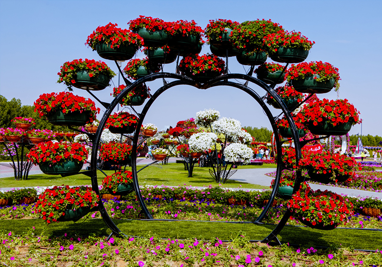 Wallpaper Dubai Emirates UAE Miracle Garden Nature Petunia ...