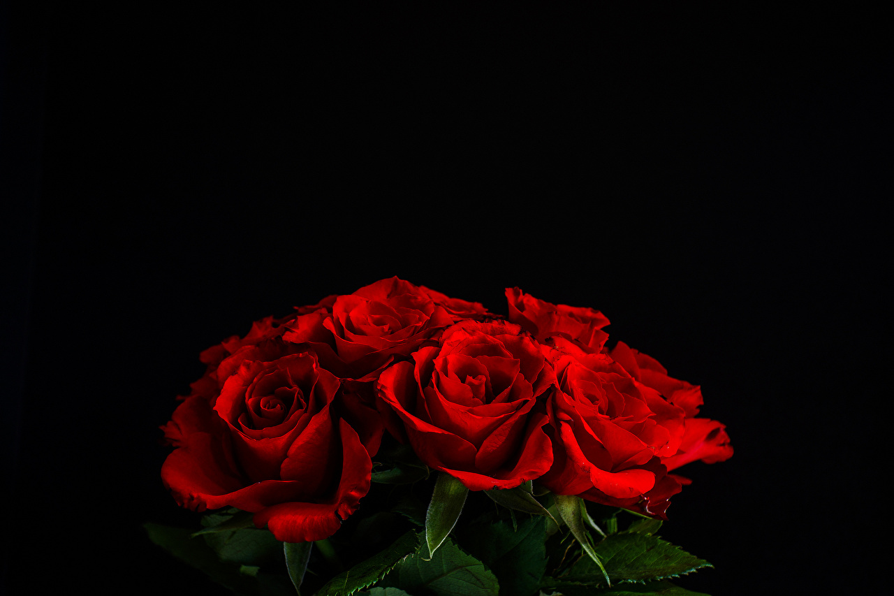 Images Red Roses Flowers Black background