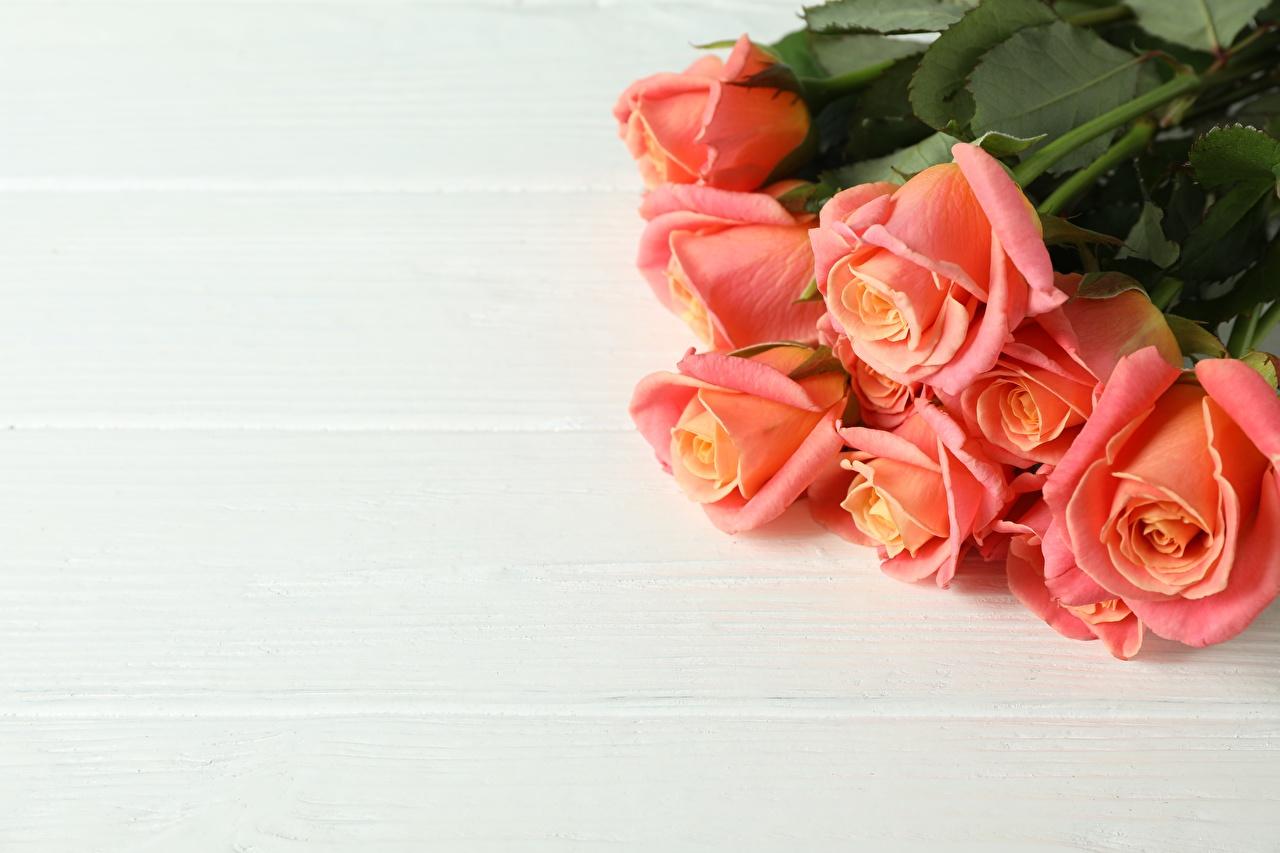 Fotos von Blumensträuße Rosen Rosa Farbe Blüte Vorlage Grußkarte Bretter Sträuße Rose Blumen