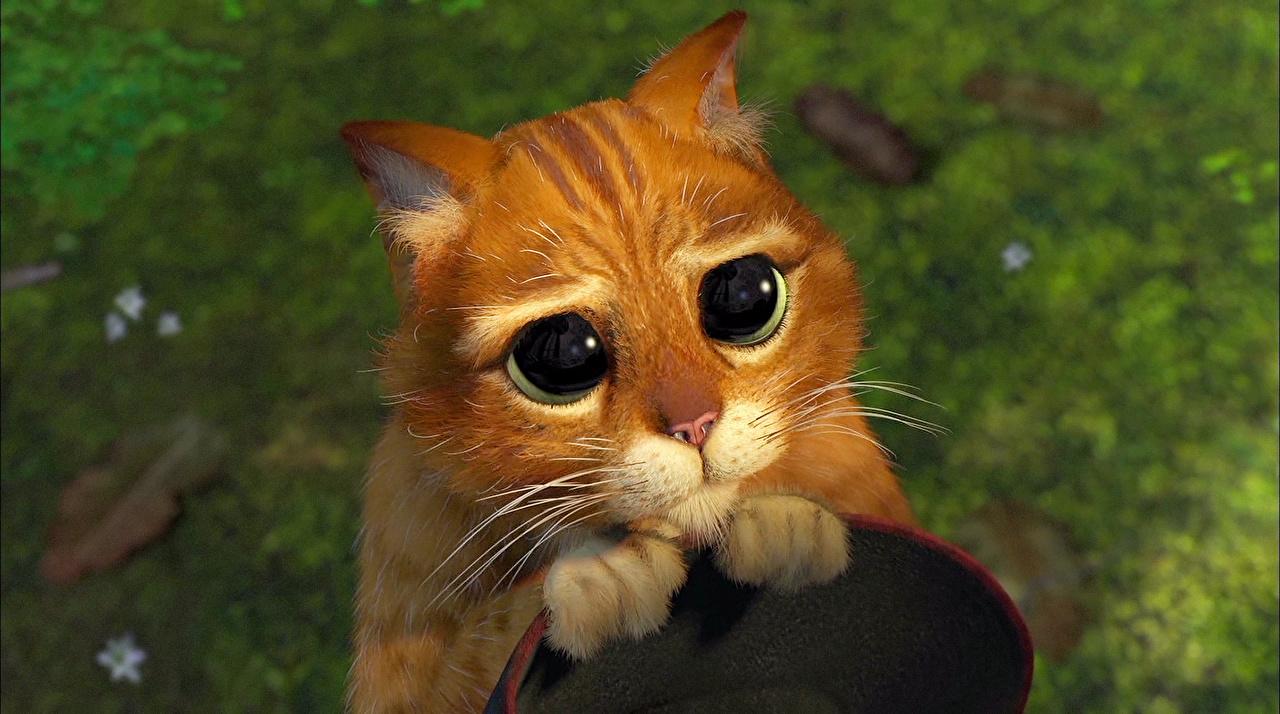 壁紙シュレック飼い猫目凝視オレンジ色動物漫画