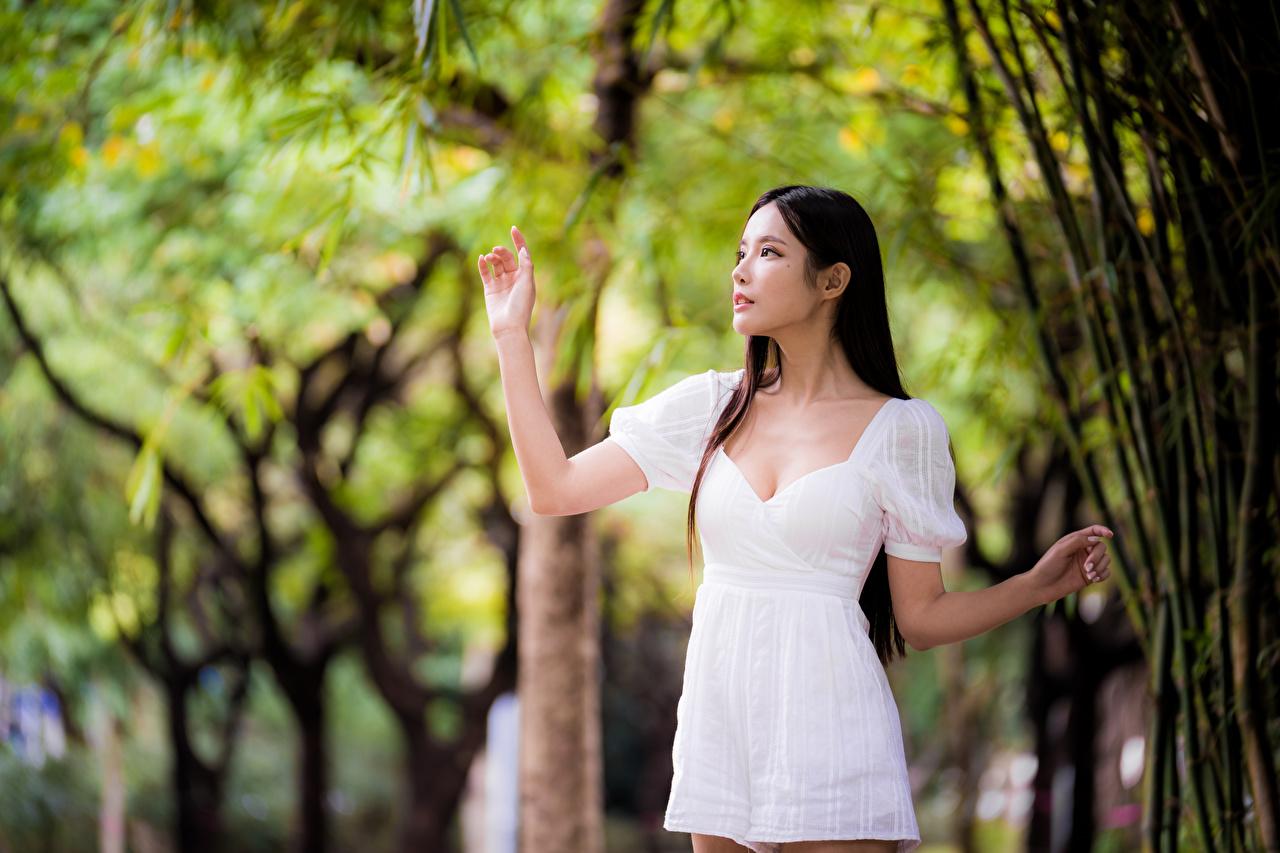 Fotos von unscharfer Hintergrund posiert Mädchens Asiatische Hand Kleid Bokeh Pose junge frau junge Frauen Asiaten asiatisches