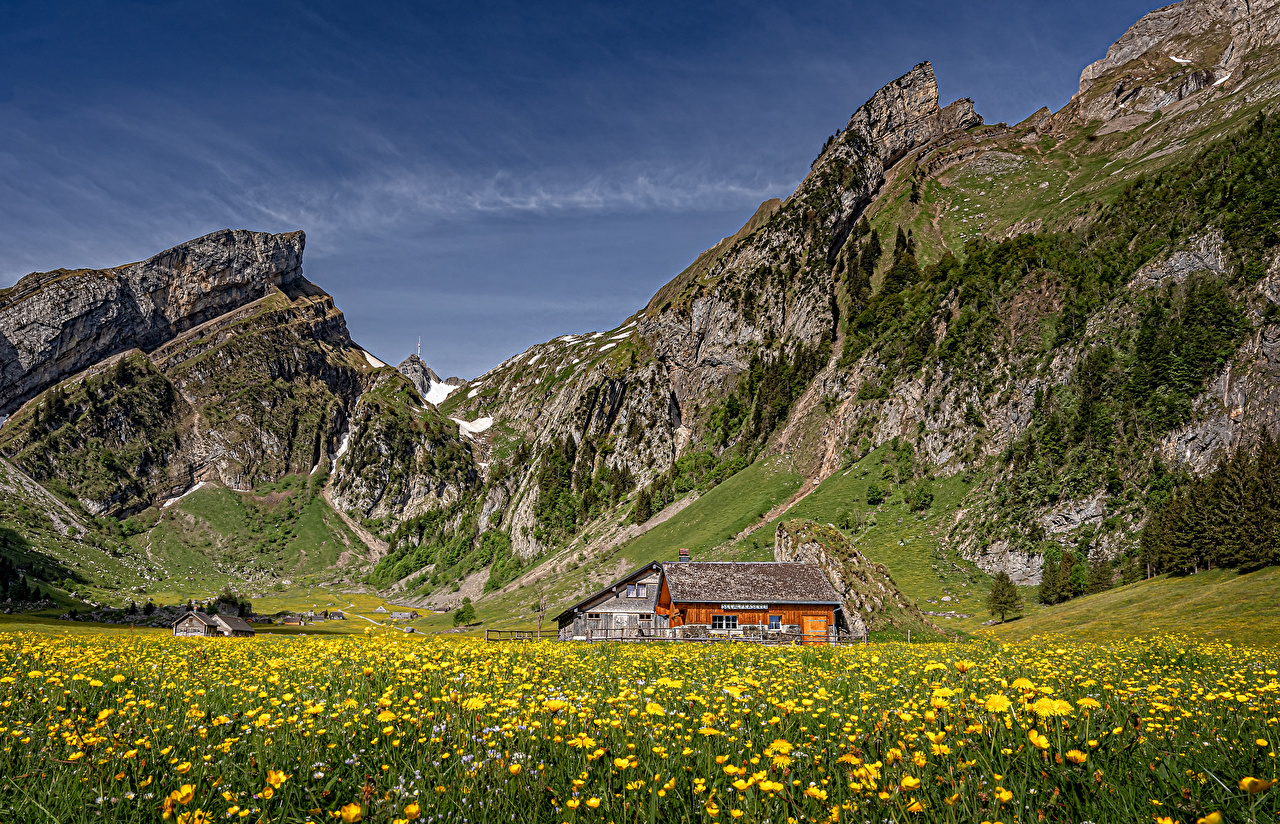 Photo Alps Switzerland Alpstein Nature mountain Meadow Taraxacum Houses Mountains Dandelions Grasslands Building