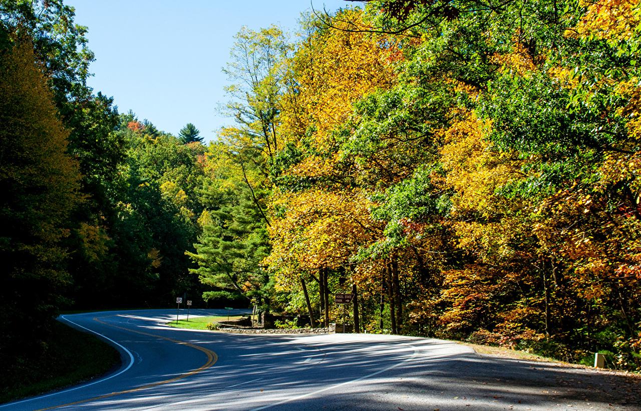 Bilder amerika Vogel State Park Høst Natur vei park Skoger USA skog Veier Parker
