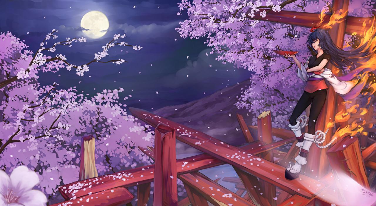 Fondos De Pantalla Magia Wing No Kioku Original Sakura