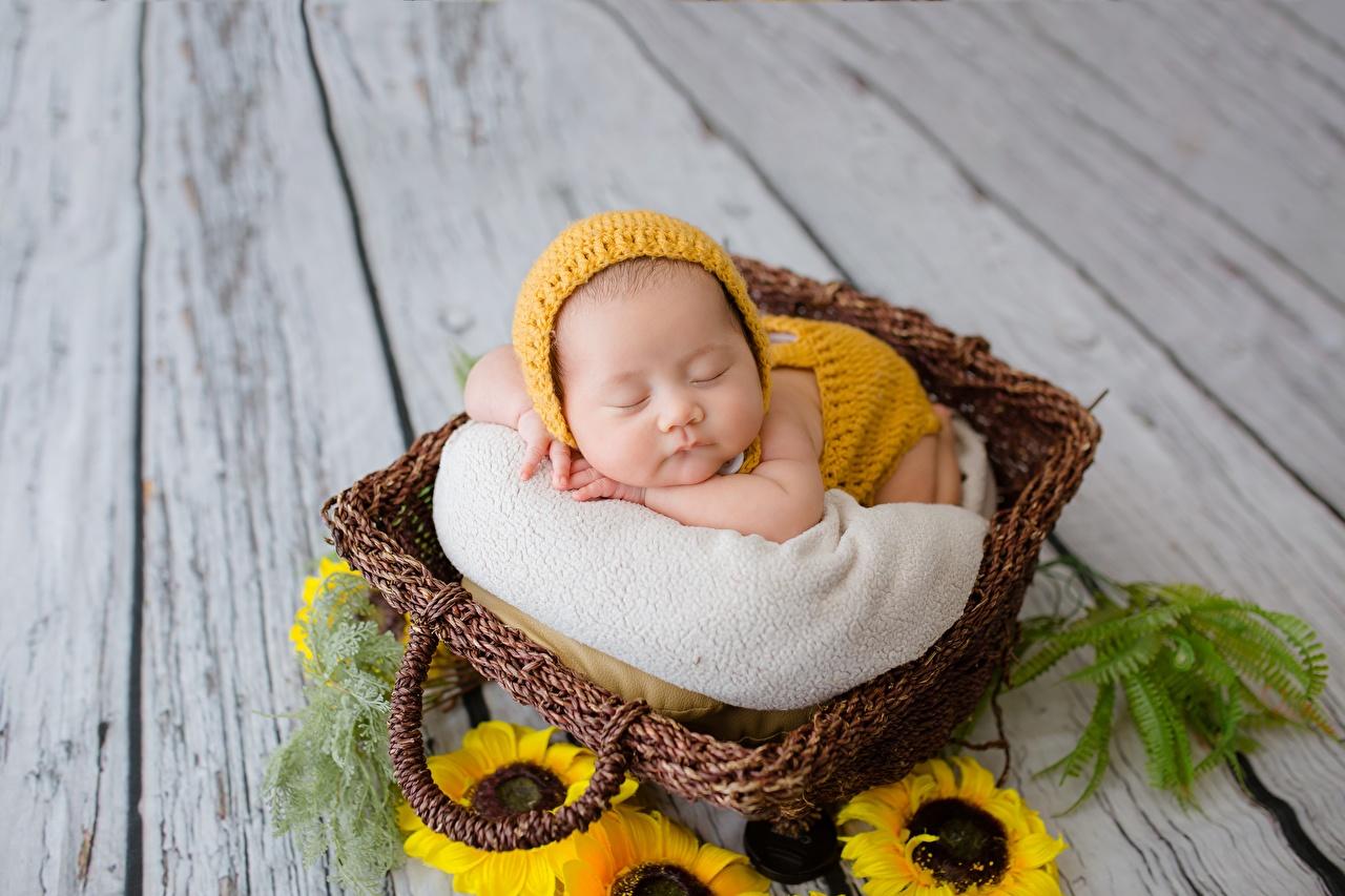 Bilder Säugling kind schlafen Weidenkorb asiatisches Sonnenblumen Baby Kinder Schlaf schläft schlafende schlafendes Asiaten Asiatische