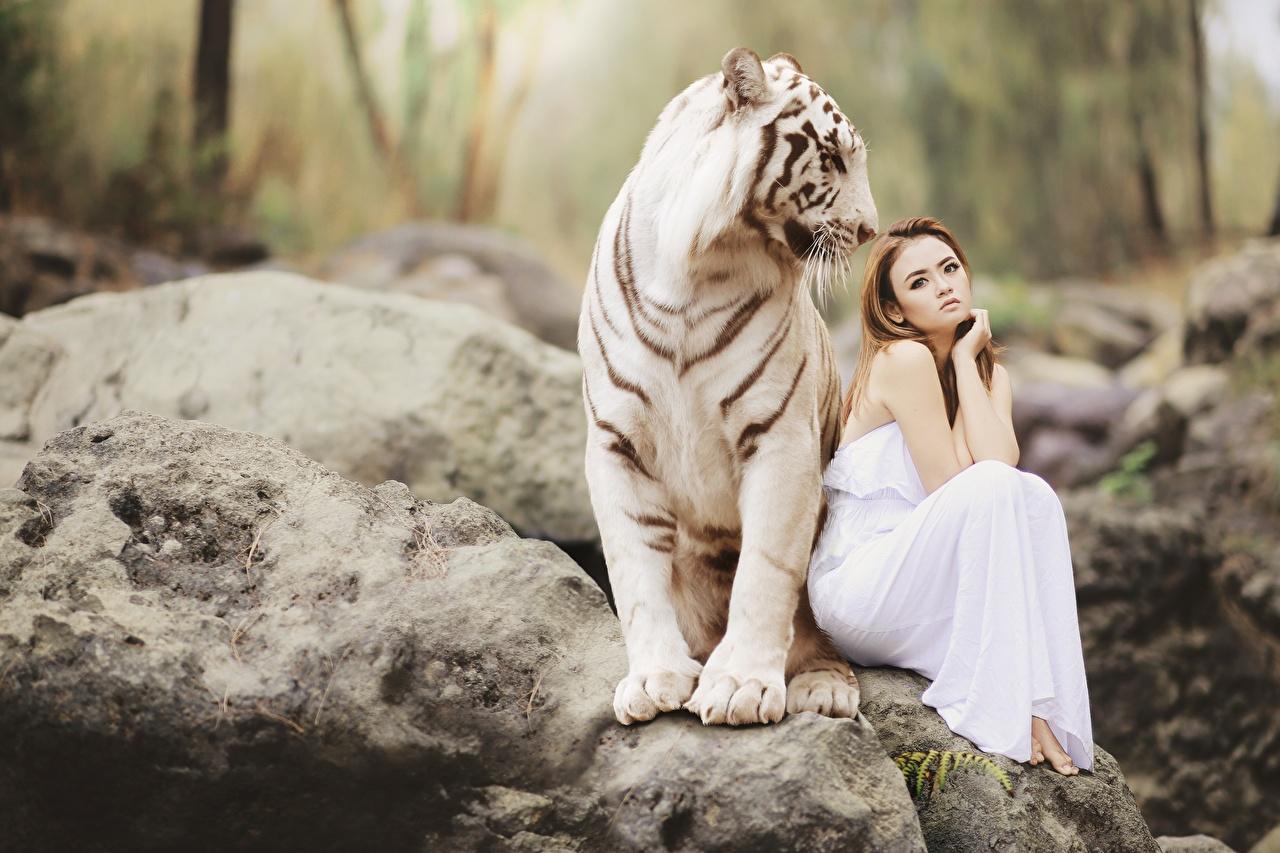 Bilder von Tiger Braune Haare Bengal tiger Zwei Asiatische Steine Sitzend Tiere Braunhaarige 2