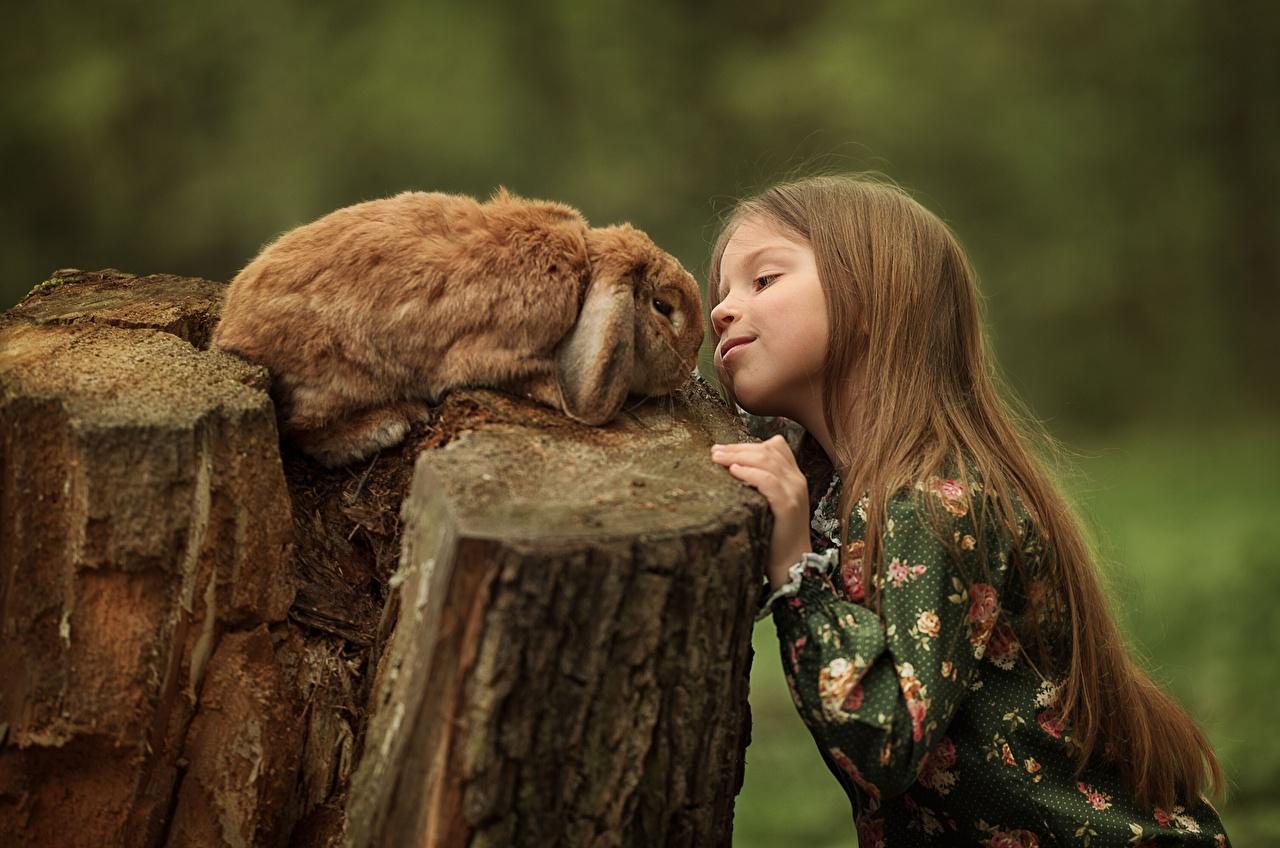 Desktop Hintergrundbilder Kleine Mädchen Kaninchen Braunhaarige Julia Kubar kind Baumstumpf Braune Haare Kinder