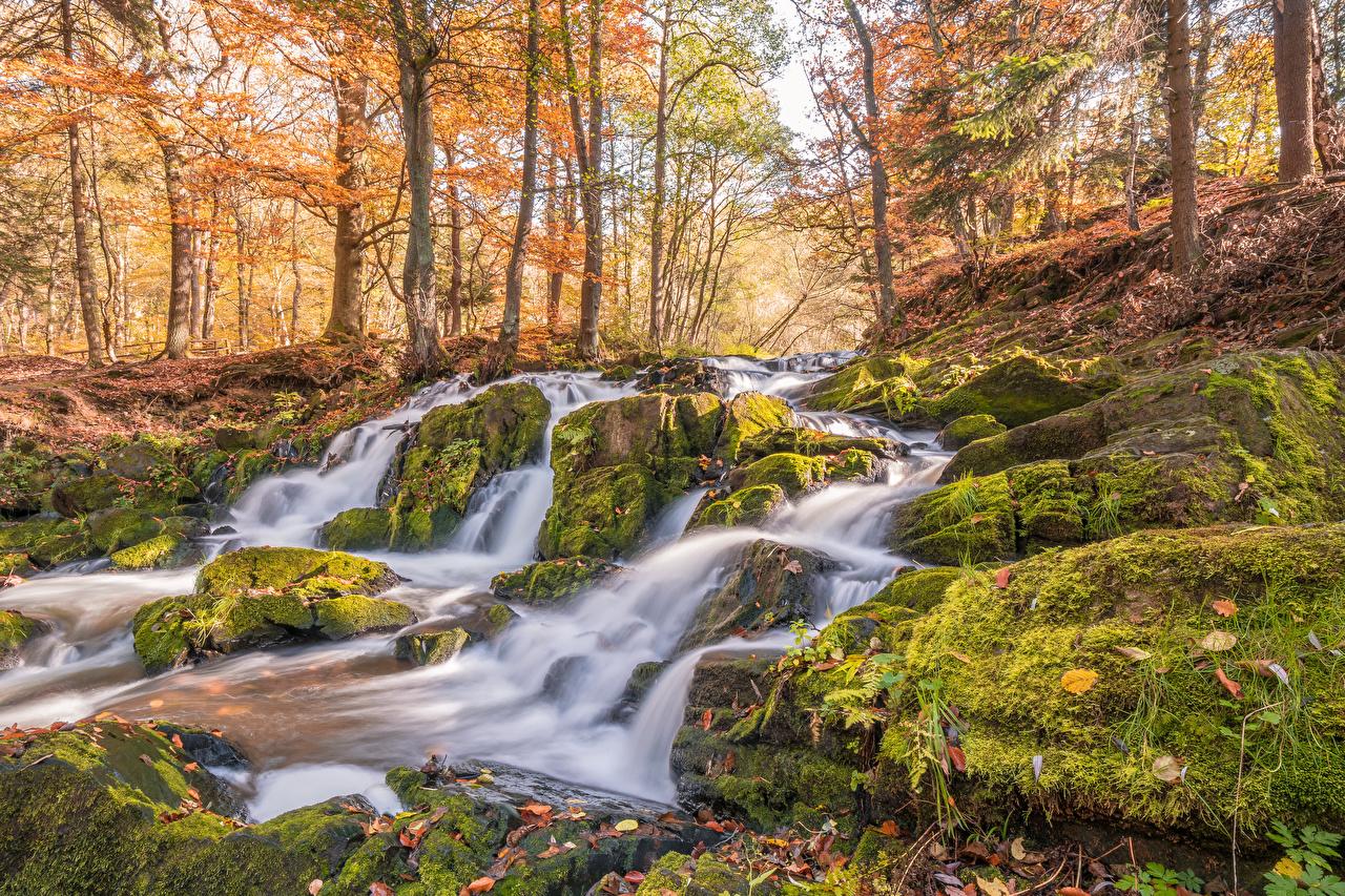 Bilder Deutschland Selkefall Harzgerode Natur Herbst Wasserfall Laubmoose Bäume