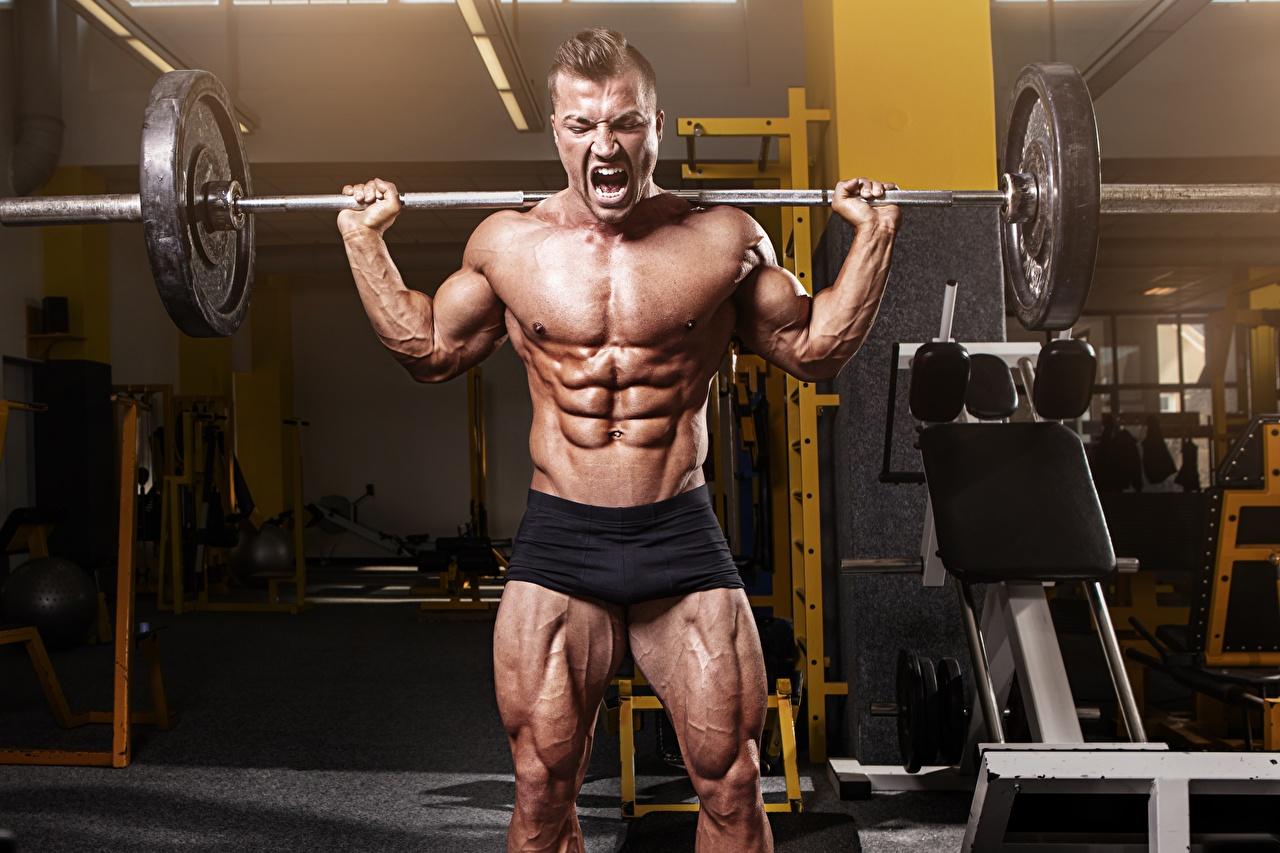 Bilder Mann Muskeln Trainieren Fitnessstudio sportliches Hantelstange Bodybuilding Bauch Turnhalle Körperliche Aktivität Sport