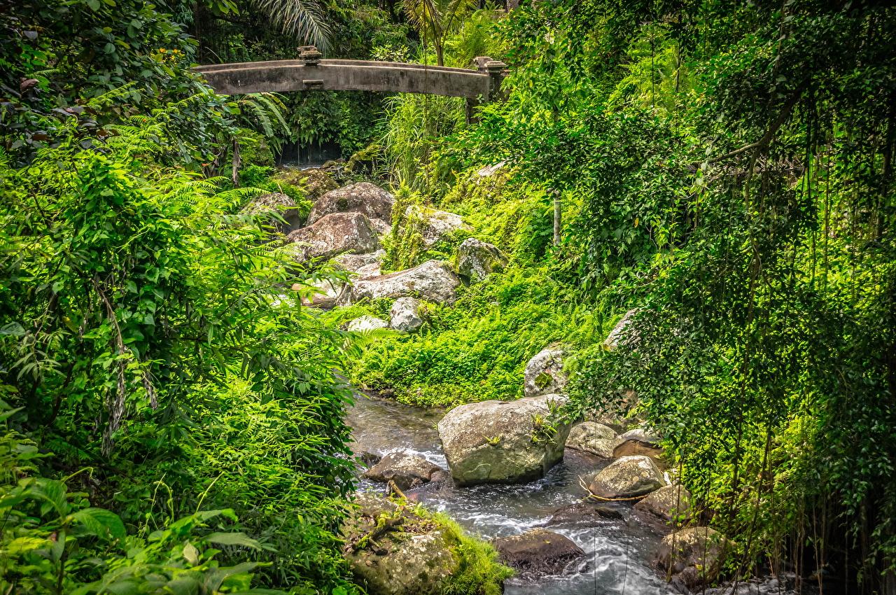 Fotos von Indonesien Tampaksiring, Bali Bach Natur Brücken Wälder Stein Bäche Brücke Wald Steine