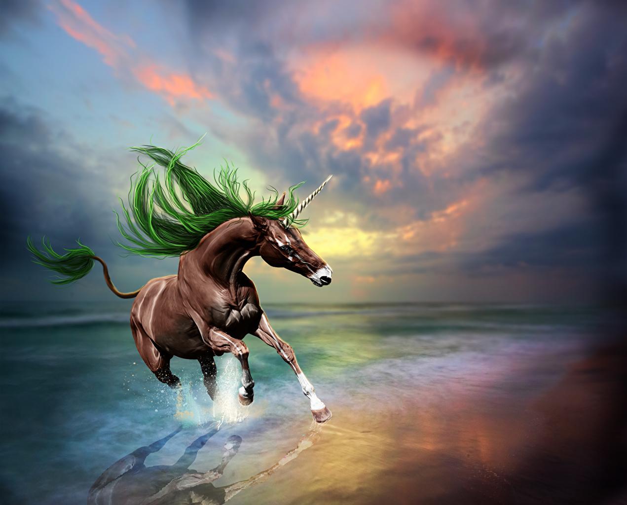 Bilder på skrivbordet Enhörningar Löpning Fantasy Kusten Magiska djur