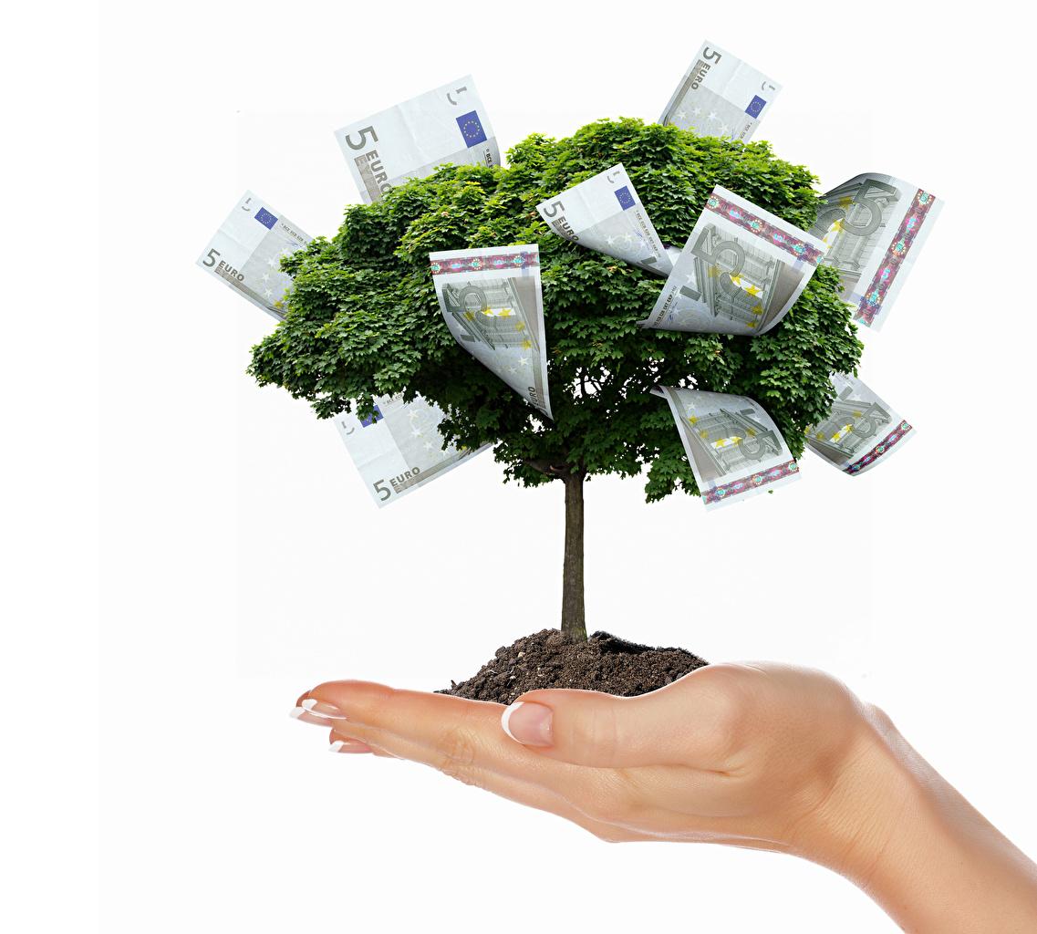 Bilder Euro Banknoten Kreativ Hand Geld Bäume Weißer hintergrund Papiergeld Geldscheine