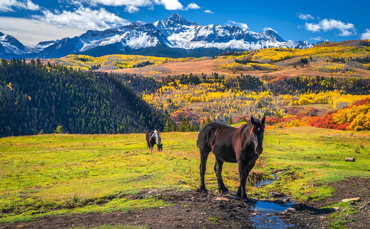 Desktop Hintergrundbilder Hauspferd Vereinigte Staaten Wilson Peak, Colorado Natur Herbst Gebirge Tiere Pferd Pferde USA Berg ein Tier