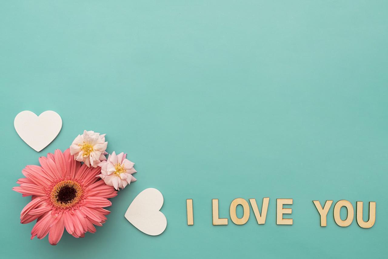 Bilder von Valentinstag Englisch Herz Gerbera text Blüte Vorlage Grußkarte englische englischer englisches Wort Blumen