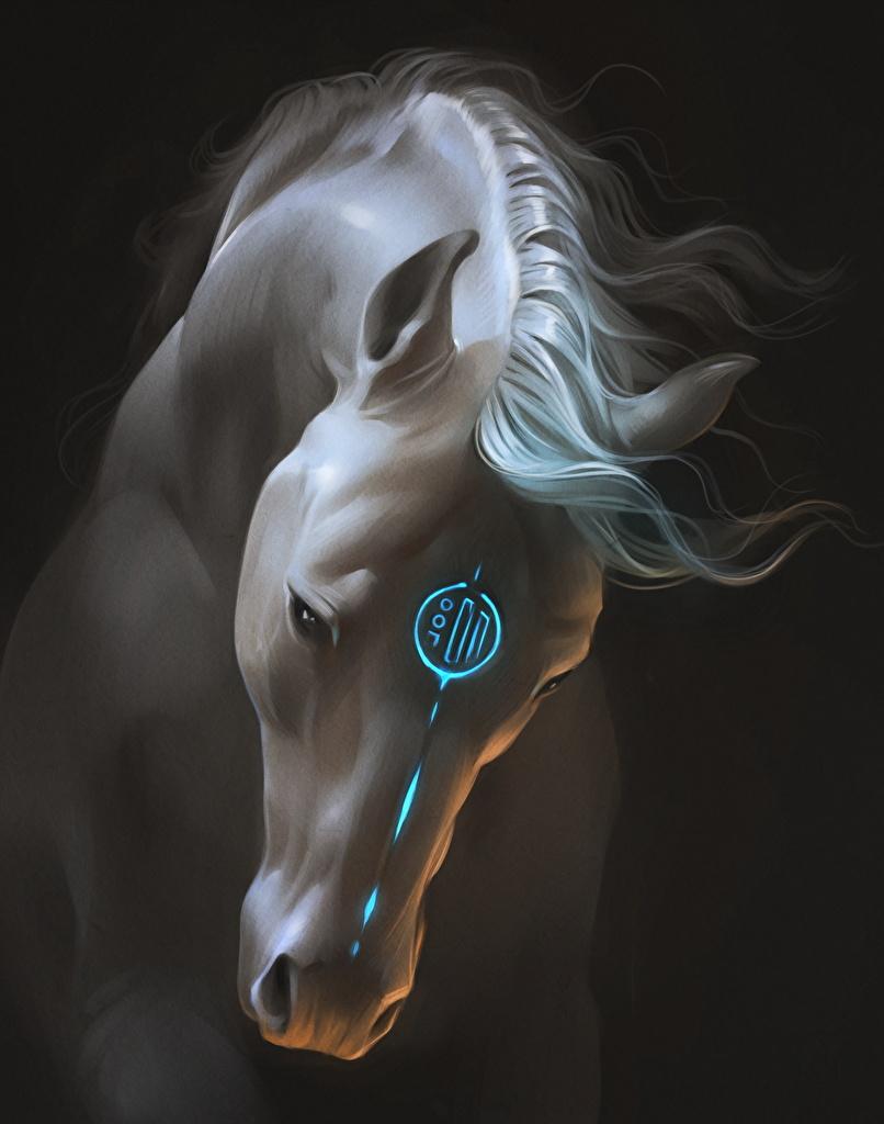 Photos Horse Fantasy Magical Animals