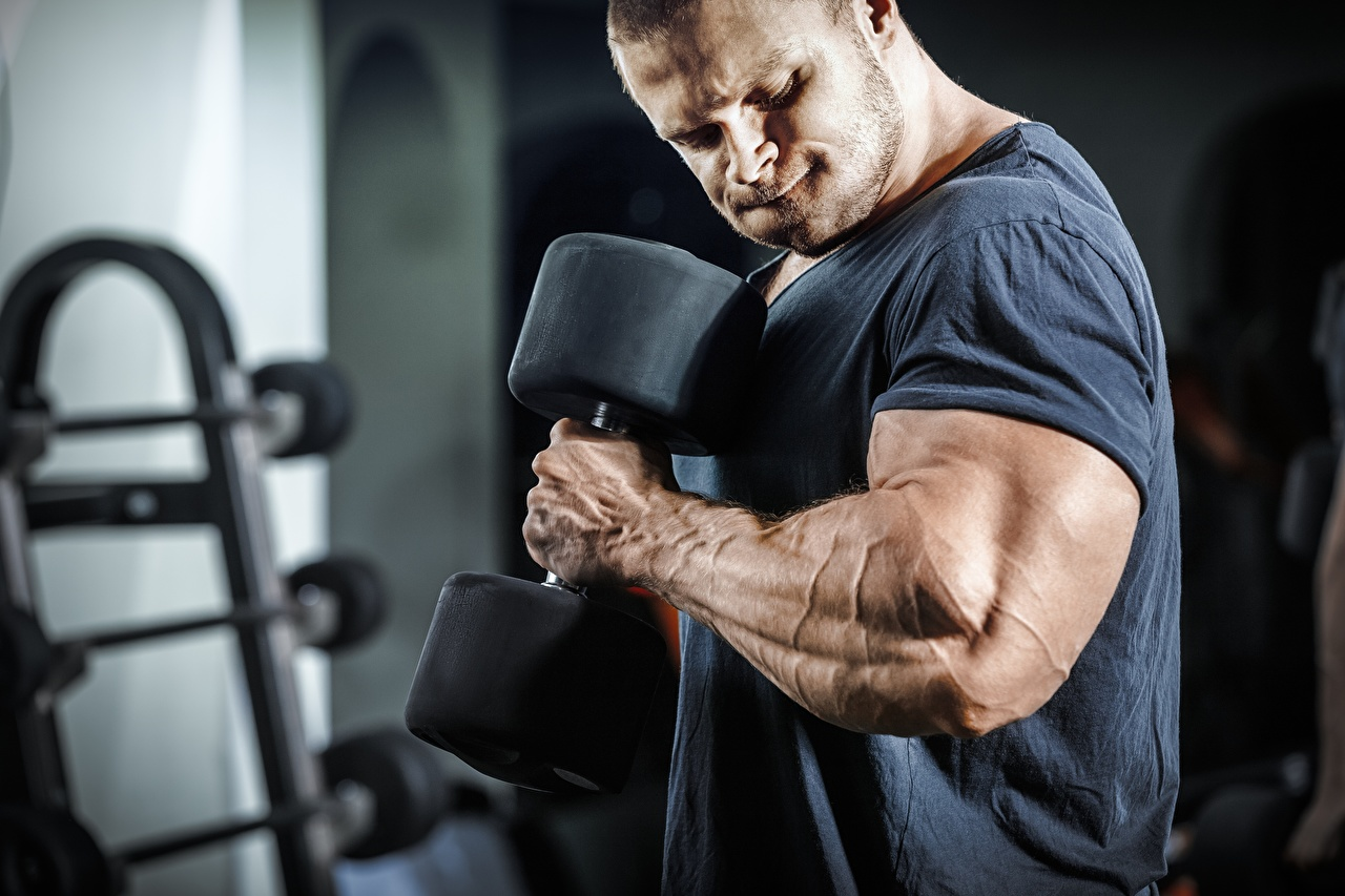 Pictures Men Muscle Workout dumbbell athletic Bodybuilding Hands Man Physical exercise Sport sports Dumbbells