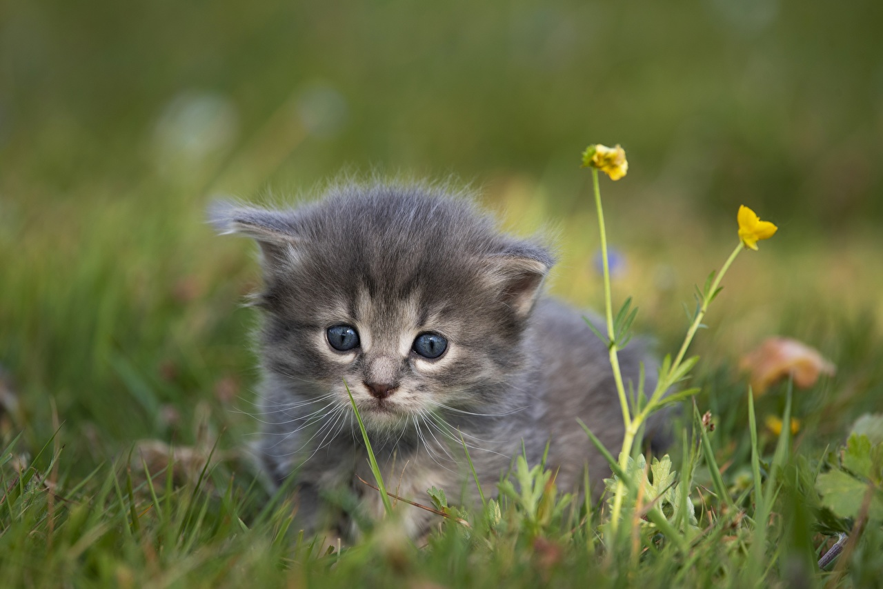 Picture kitty cat Cats blurred background Grass Glance Animals Kittens cat Bokeh animal Staring