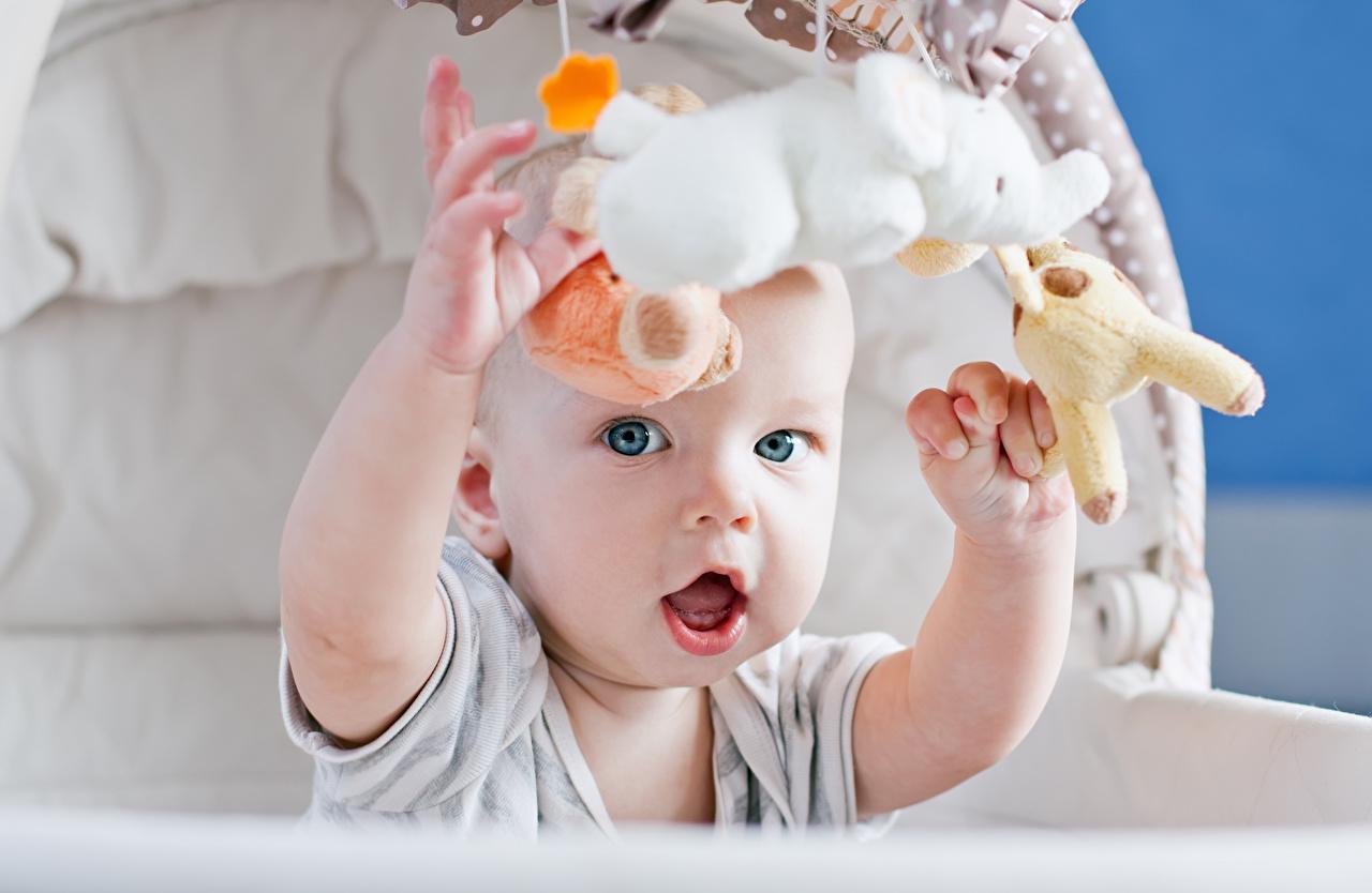 Pictures Infants child Hands toy Glance Baby newborn Children Toys Staring
