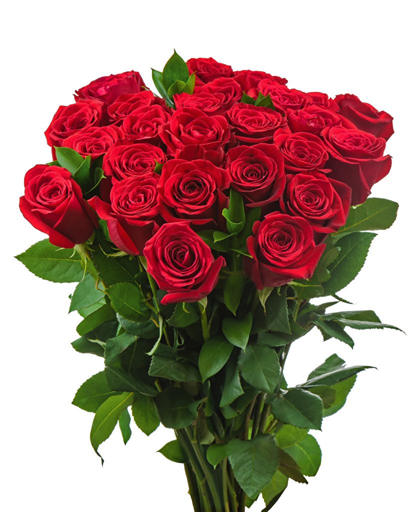 Foto Sträuße Rot Rosen Blumen Weißer hintergrund